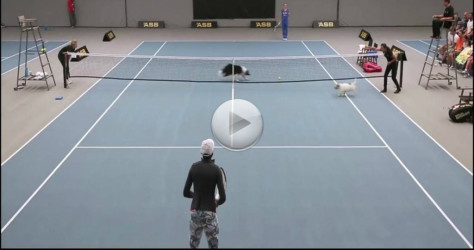 These Dogs Love Their New Jobs As Ball Boys – This Is So Great