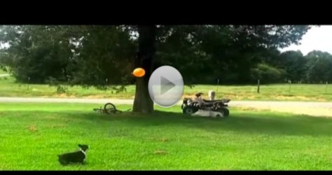 Give A Dog A Balloon And He'll Be Happy All Day Until…