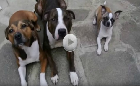 Wait! Hilarious! Watch This Little Dog. What He Does Will Make You Laugh!