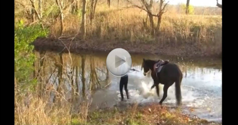 Watch As This Horse Enters The Water – What He Does Next Is So Cute…